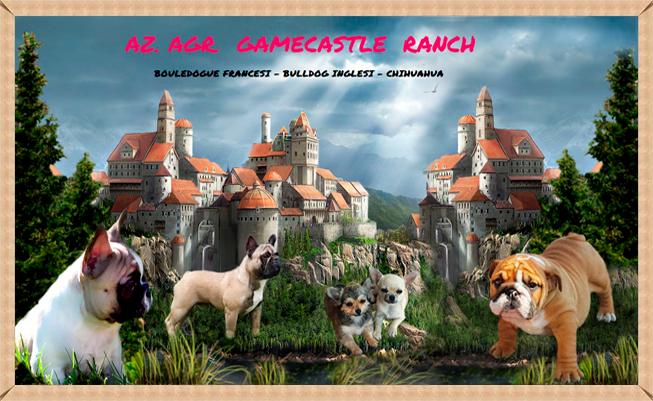 Gamecastleallevamenti Rottweiler Cuccioli Bouledogue Francesi