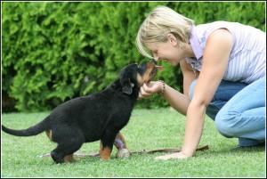 Gamecastleallevamento Rottweiler Salute E Cura Del Rottweiler