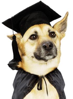 sk1h48-educare-i-cani